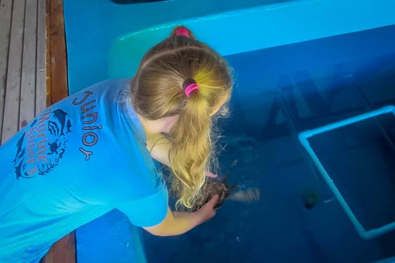 Saphire Marine Biology Internship Maldives (turtle nest 3)