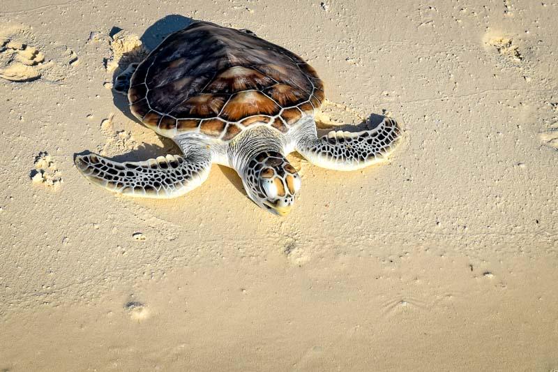 Smash turtle release Marine Savers Maldives (0024)