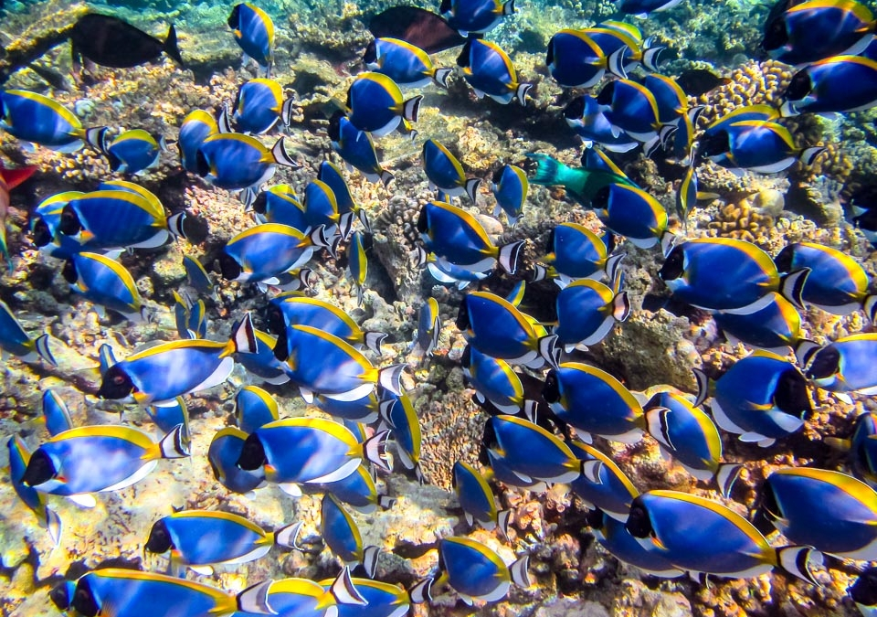Rafaela's Marine Biology Blog