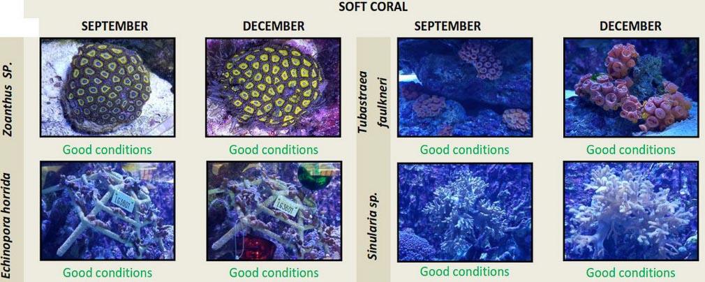 Fishlab and Marine Discovery Centre Landaa Giraavaru Maldives (3)