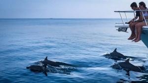 Julia marine biology intern Reefscapers Maldives dolphins (Meet Marine Intern Julia)