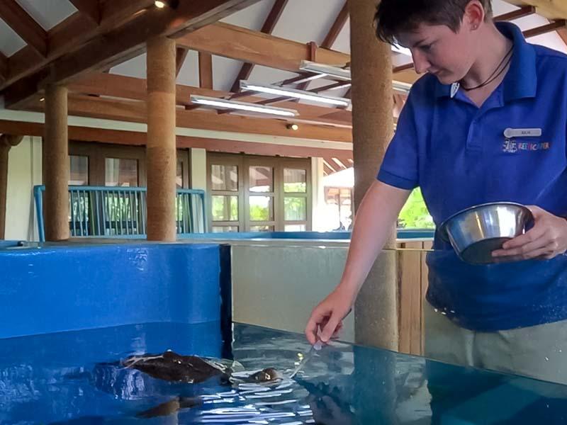 Juliet – Marine Savers internship Maldives (2) turtle care