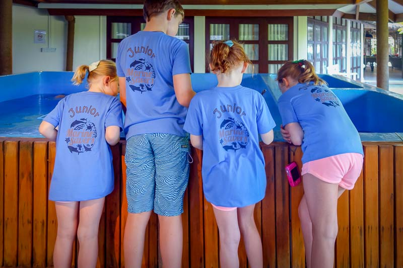 Junior Marine Savers children turtle care Maldives (02880)