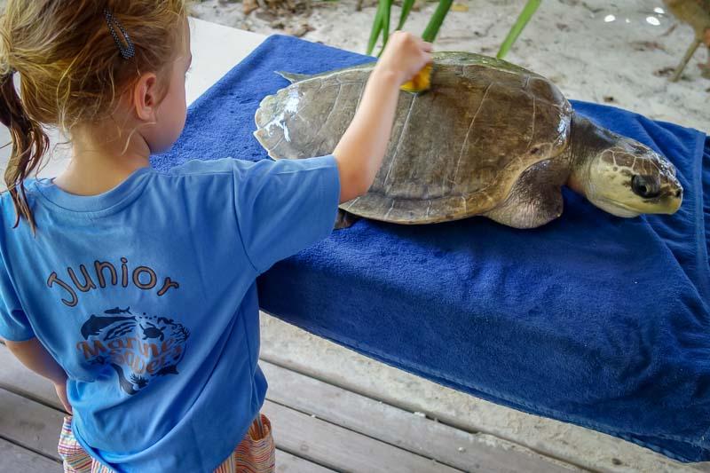 Junior Marine Savers children turtle care Maldives (03085)