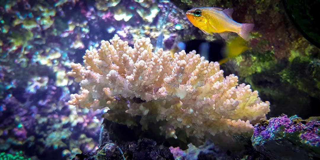 Large marine aquarium Landaa Giraavaru Maldives