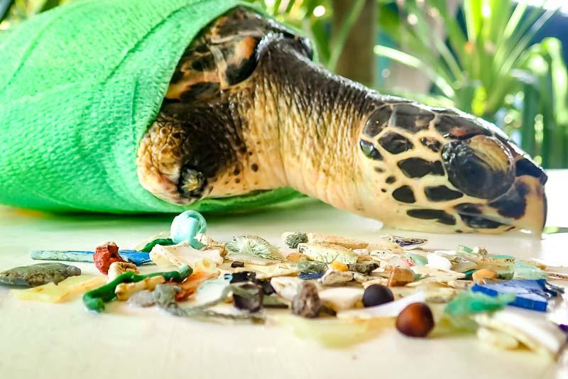 Tao rescue Hawksbill sea turtle Maldives plastic ingestion