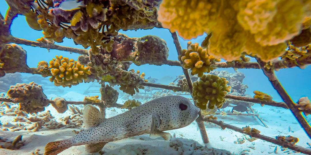 Reefscapers coral frames - marine life Maldives