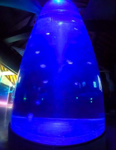 Kreisel Jellyfish Tank at Marine Savers Maldives