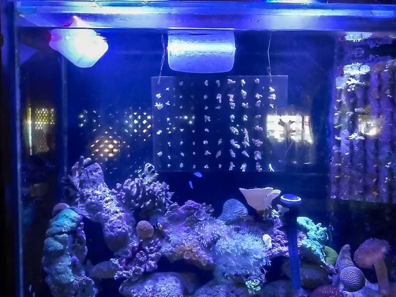 Aquarium 2 - using ice containers to lower water temperature