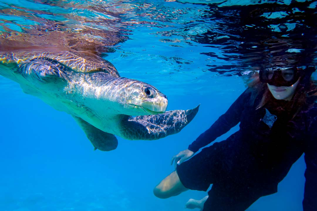 Chomper rescue turtle Marine Savers Maldives