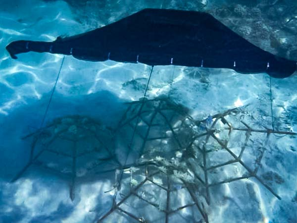 Reefscapers shading devices to prevent bleaching