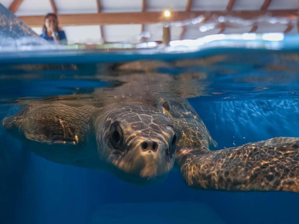 Bowser rescue sea turtle Marine Savers Maldives (3) [960px]