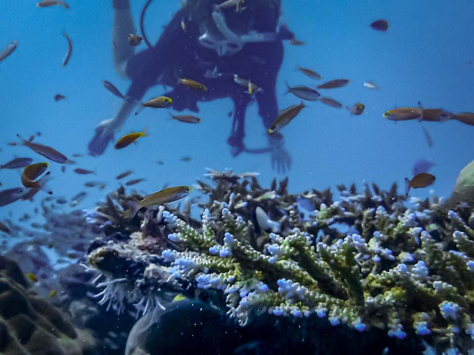 Olivia's Marine Biology Internship