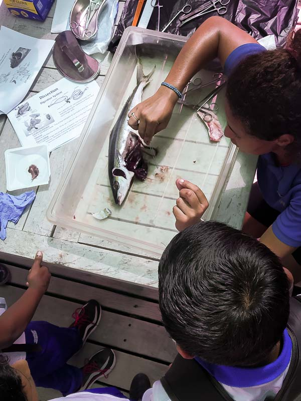 School visit to Marine Savers by Kamadhoo - fish dissection