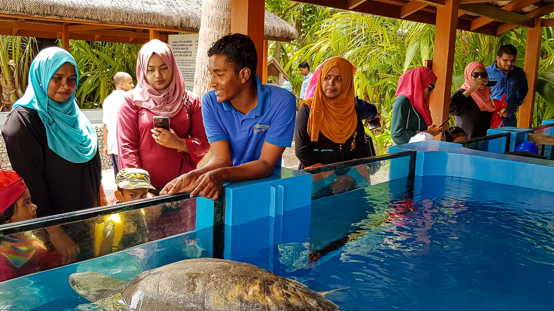 School visits to Marine Savers - turtle rehabilitation