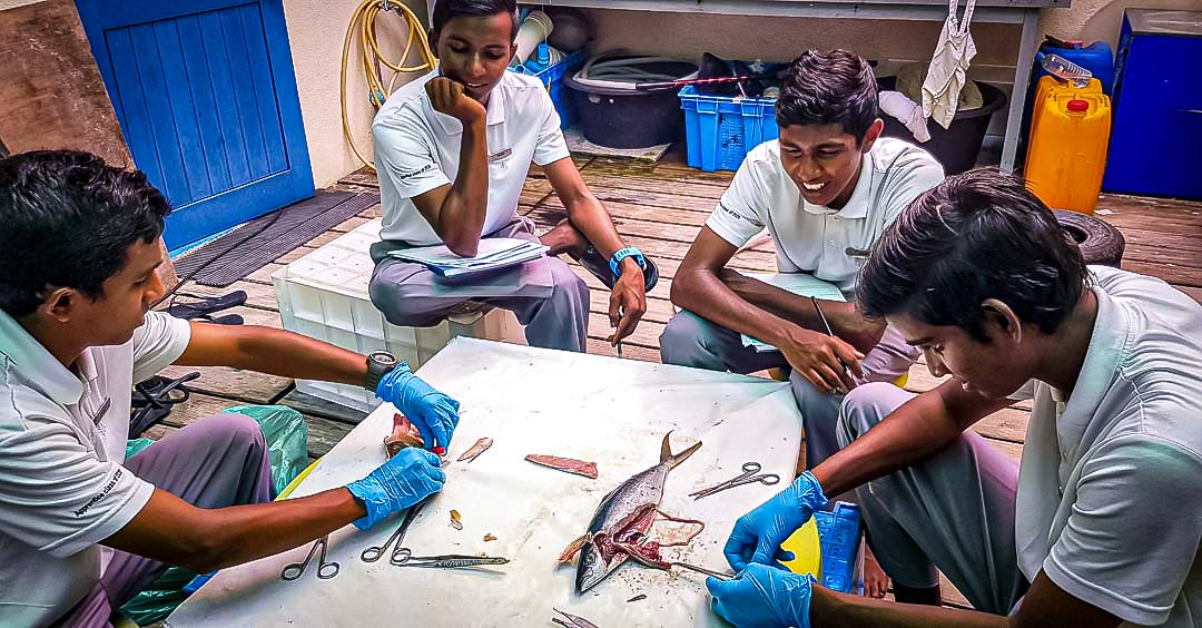 Marine biology apprenticeship at Four Seasons Maldives