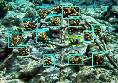 Reefscapers AI coral detection and identification