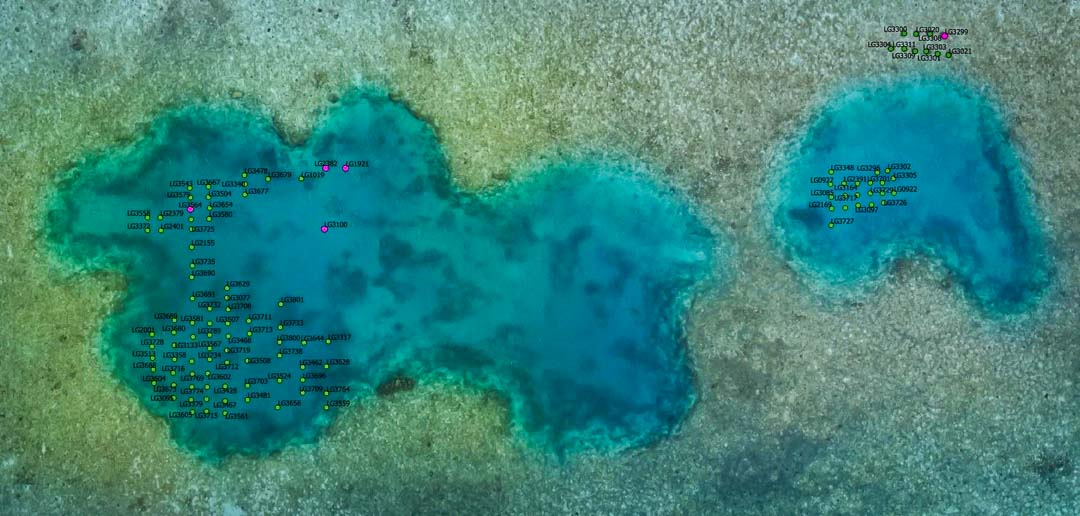 Reefscapers coral frames GPS locations at Blue Hole