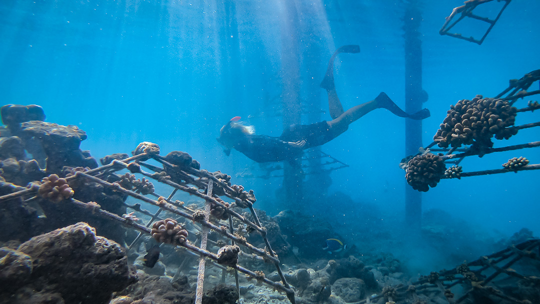 Reefscapers coral propagation and reef regeneration Maldives