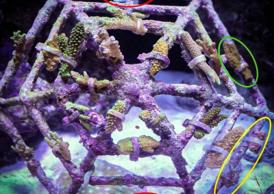 Reefscapers mini coral frame