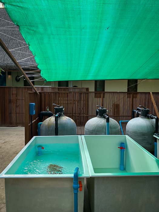 Reefscapers new outdoor coral propagation tanks Maldives (2) [800]