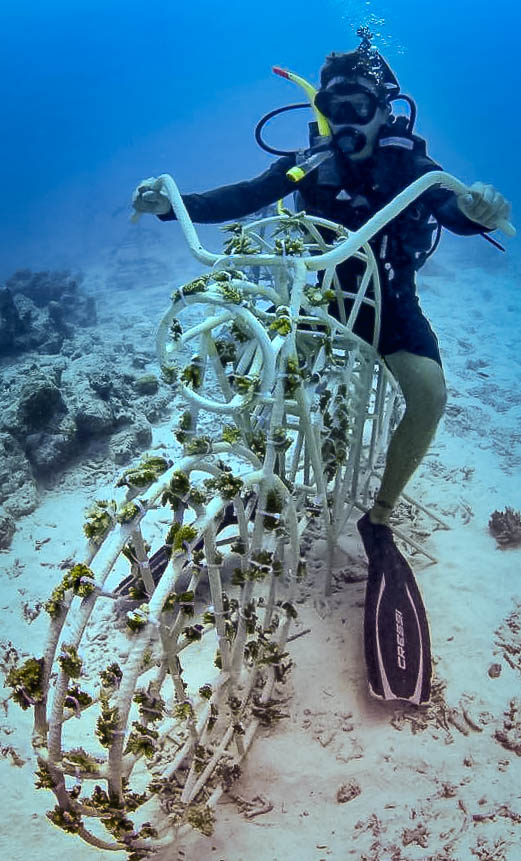 Reefscapers coral frame motorbike