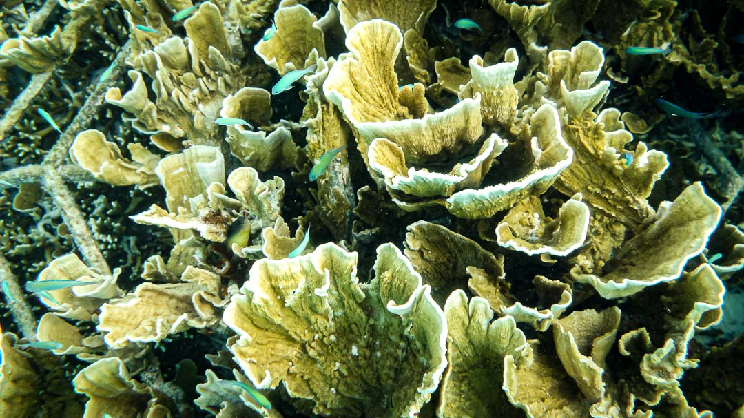 Reefscapers coral frames closeup