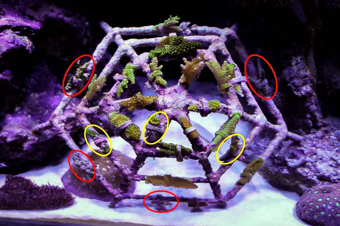 Aquarium-1 mini coral frame