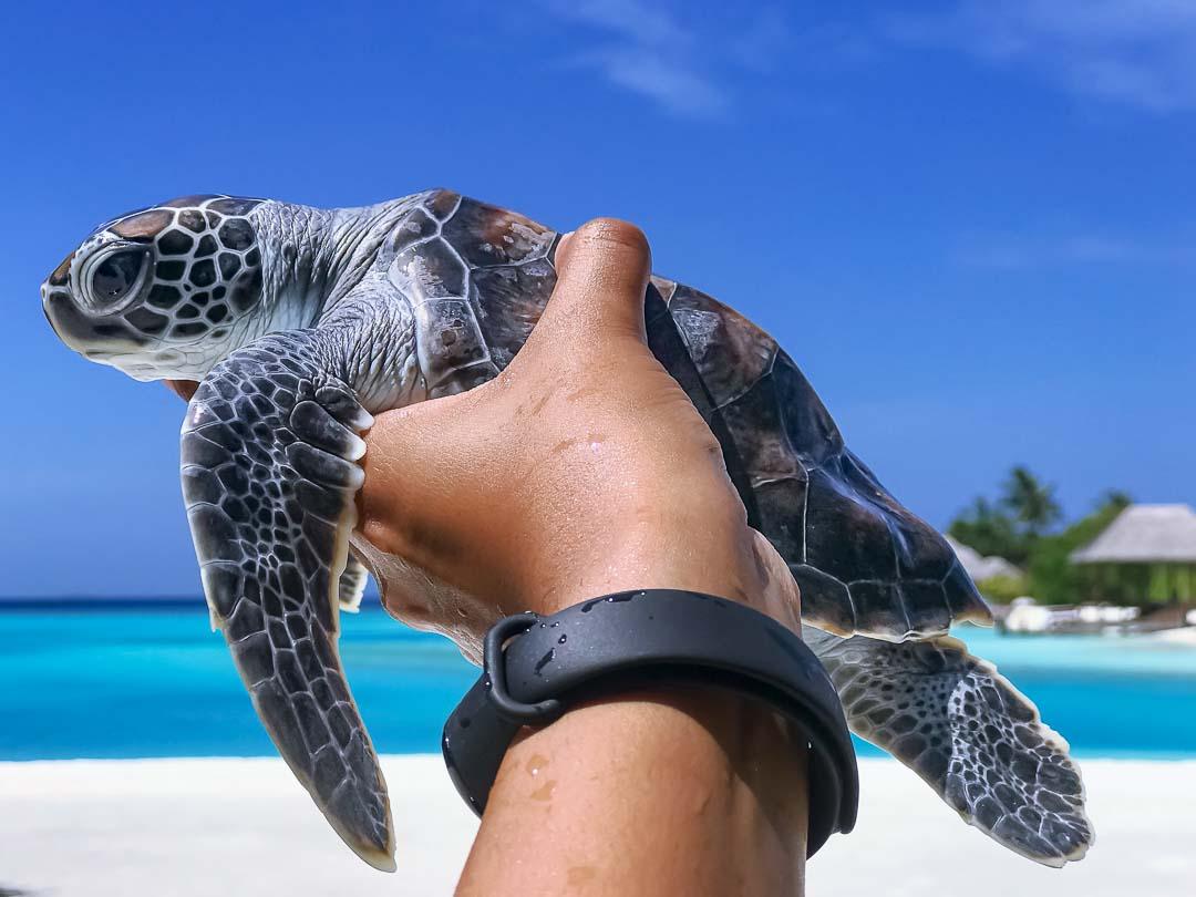 Maanee marine biology internship Maldives