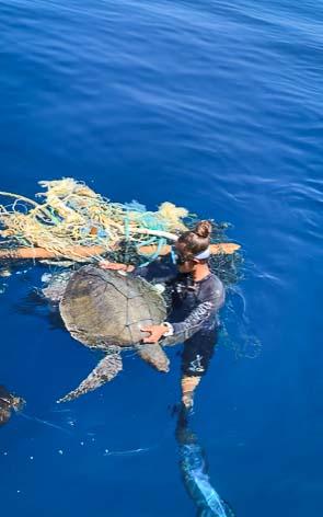 Georgia stranded sea turtle rescue Maldives