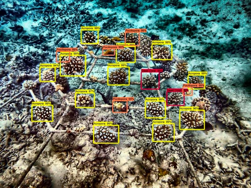 Reef monitoring catamaran AI coral identification