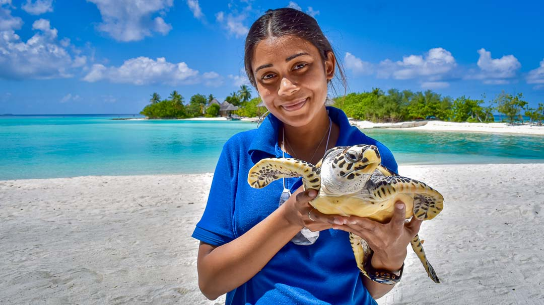 Maanee marine biologist Maldives Toby turtle release