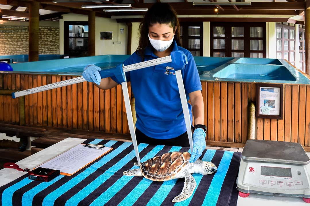 Maanee marine biologist Maldives turtle monitoring Tuesdays