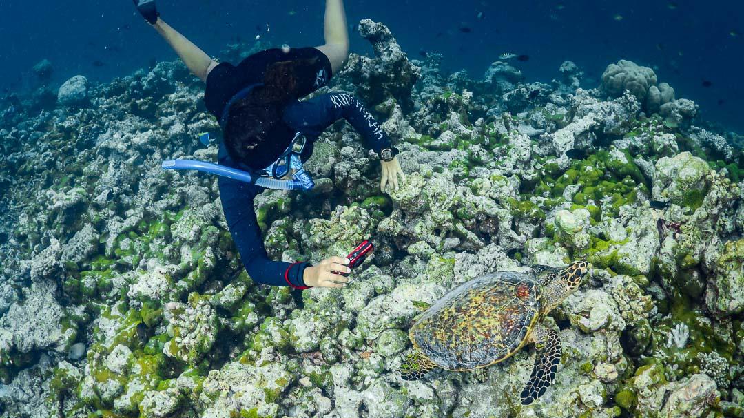 Maanee marine biologist Maldives turtle safari