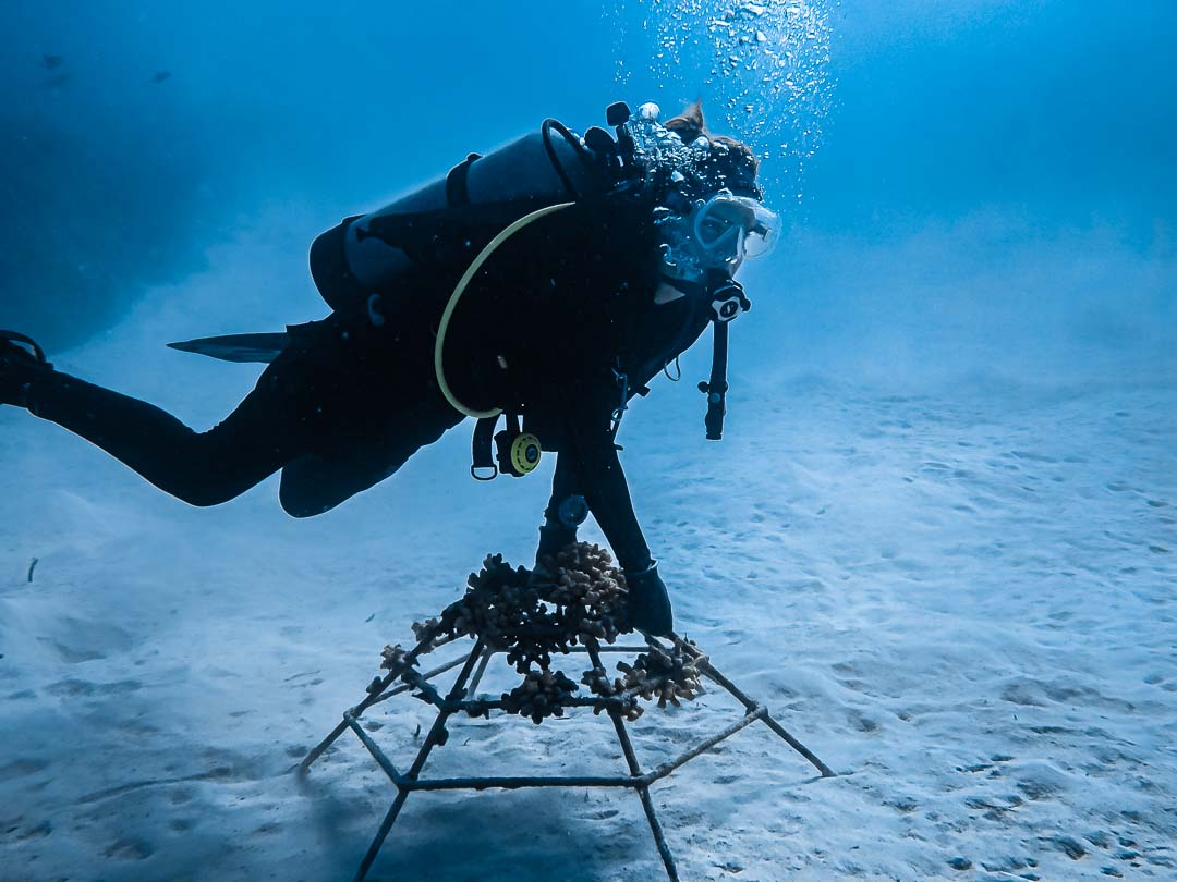 Reefscapers coral frames relocation dive work Maldives