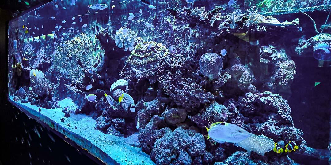 Aquarium marine Maldives