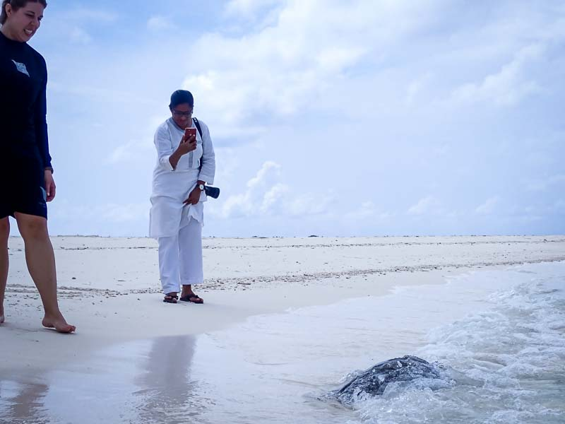 Asha sea turtle rehabilitation centre Maldives release