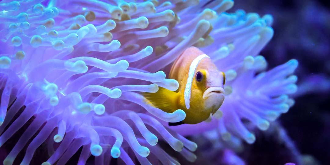 Fish Lab clownfish breeding Maldives