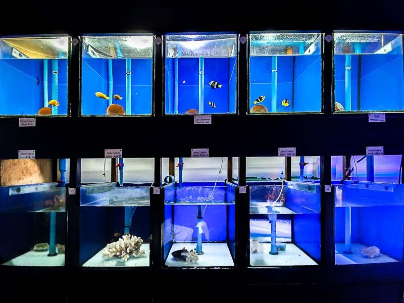 Fish Lab clownfish breeding tanks Maldives