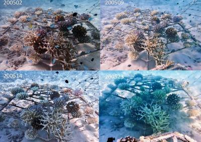 Coral bleaching (KH1824) full shade