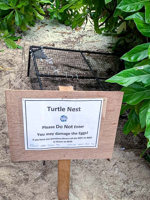 Turtle nest protection on beach Maldives