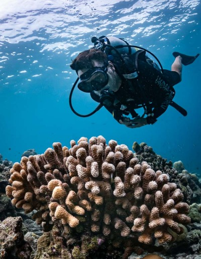 Reefscapers coral reef monitoring Maldives