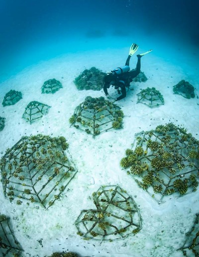 Reefscapers coral reef propagation Maldives