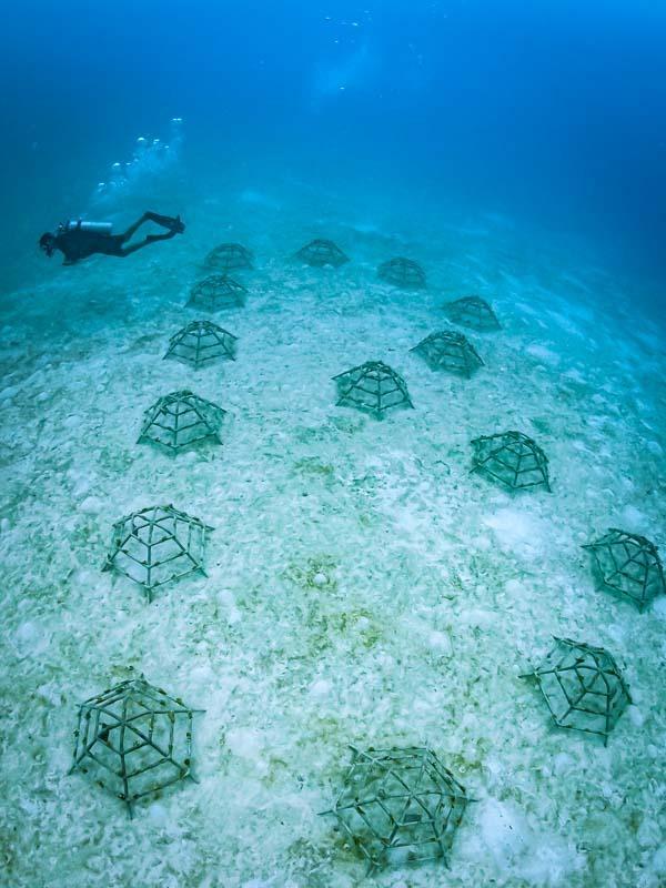 "Reefscapers - ""B"" Bissie's reef"