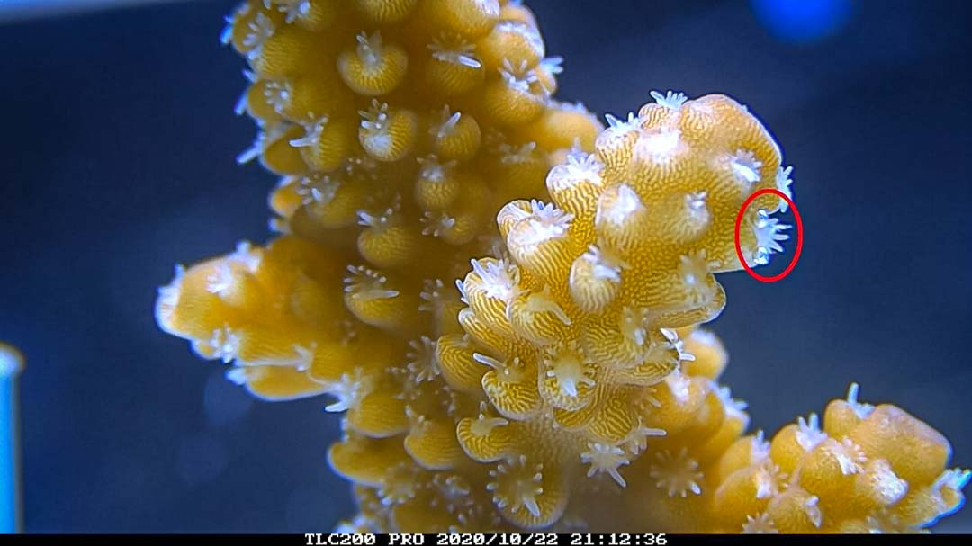 Reefscapers coral bleaching timelapse experiment R5