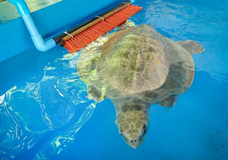 Turtle Toys!