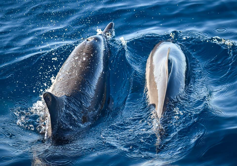 December's Dolphins