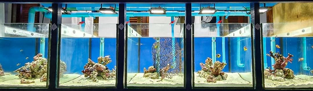 Fish lab new display tanks [LG 2020.12] [1080]