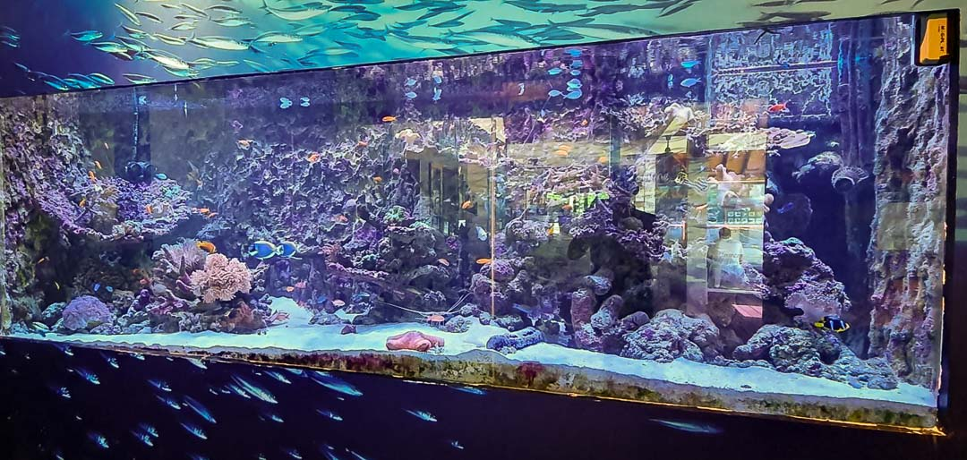 Large marine aquarium at Landaa (new lighting)