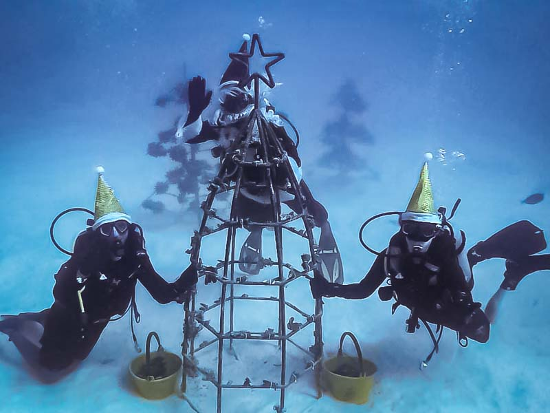 Reefscapers coral Xmas tree dive